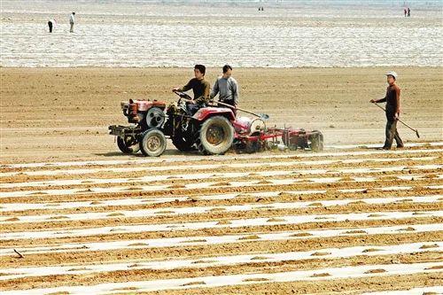 河北省廊坊市大城县祖寺村初步实现播种机械化作业时的情景.
