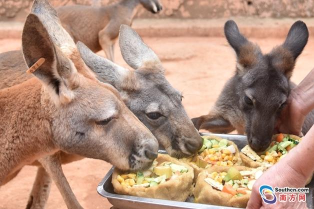 """在深圳野生动物园,小动物们喜获特制的""""腊八粥""""."""