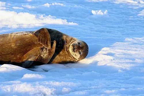 南极的海豹(视觉中国)