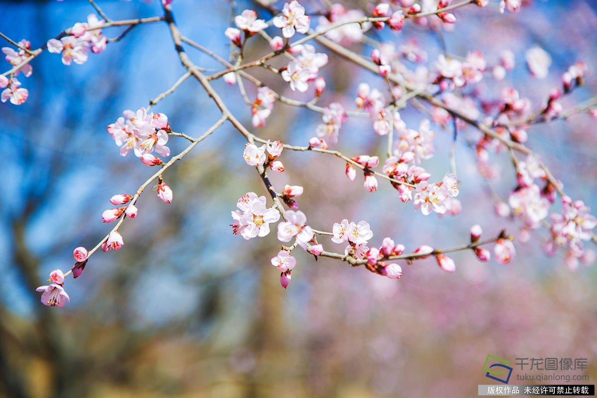 北京图见|春天来了!北京八大赏春地芬芳你的周末