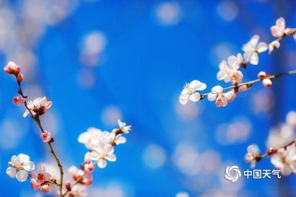 寒潮难挡北京入春脚步 周末回暖宜出游