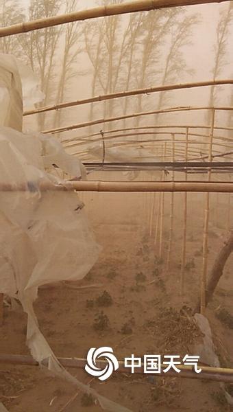 沙尘暴突袭辽宁锦州黑山县 黄土遮天狂风撕碎大棚膜