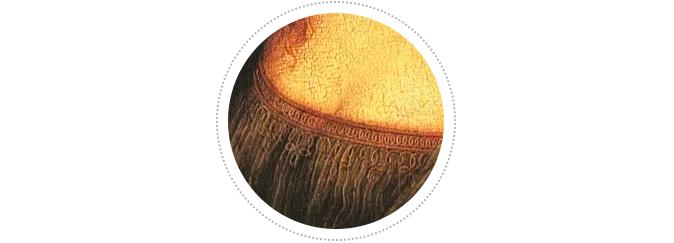 借助高分辨率图像技术,一切才水落石出,列奥纳多并没有弄错;相反,他在非常精细地描画一个衣褶(这意味着一个十字架形和一个六边形绳结图案被衣褶遮盖),位置就在乳沟正下方的紧身衣上。红外图像还显示出,虽然蒙娜丽莎的部分紧身衣被外层衣物所遮挡,但是即使在这些地方,列奥纳多依然在紧身衣上绘制了那些绣花图案,这样,即便我们看不见,也能隐约地感觉到它们的存在。