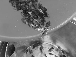 南海截获带病毒进口观赏鱼