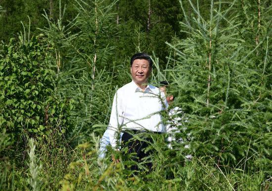 15日,习近平在赤峰市喀喇沁旗马鞍山林场了解生态文明建设情况。