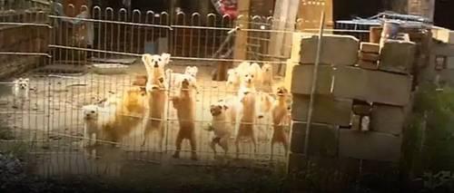 """曝光!地下宠物繁殖场触目惊心!你买的宠物,可能曾经生活在""""地狱""""!"""