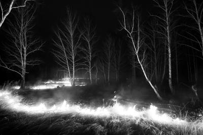 西伯利亚林火肆虐