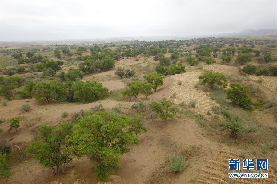 这是在武威市古浪县拍摄的八步沙林场(8月22日无人机拍摄)。新华社记者 范培珅