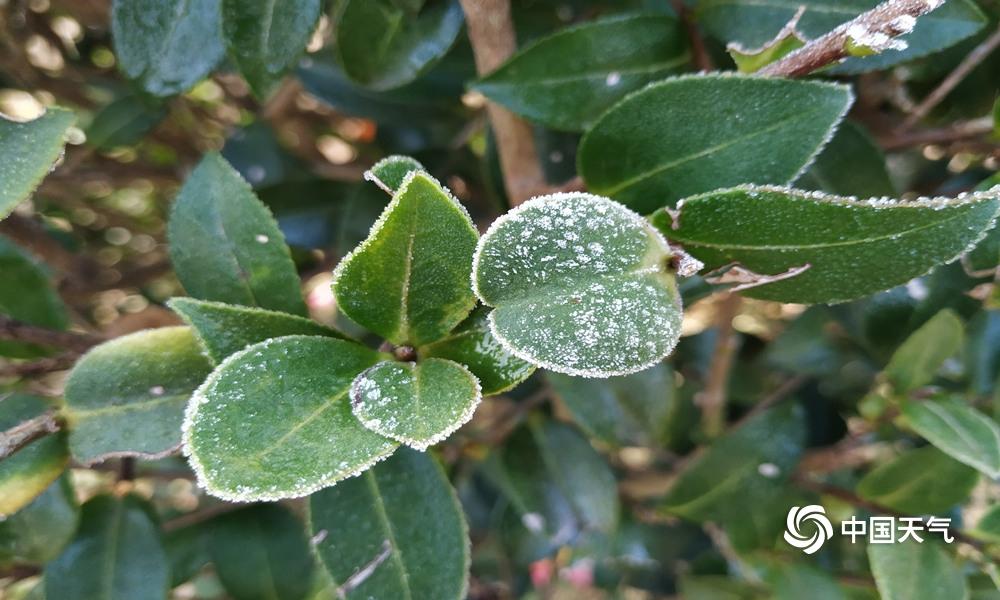 冷空气来袭 福建南平出现初霜和结冰