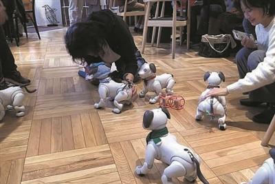机器宠物狗也有自己的约会派对