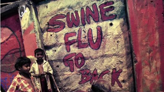 猪流感滚粗