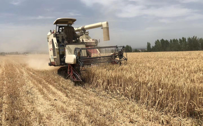 山东小麦完成采收570万亩 未来3日将进入大规模收割