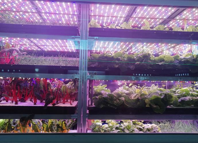 太谷变农谷 引领北方地区现代农业创新高地