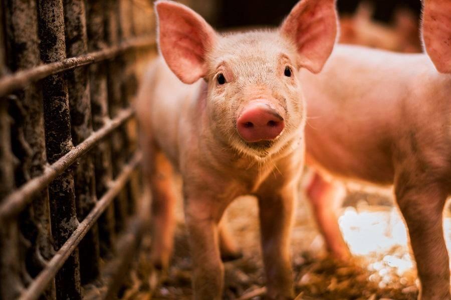国家统计局:9月CPI指数同比增长1.7%,猪肉价格开始下调