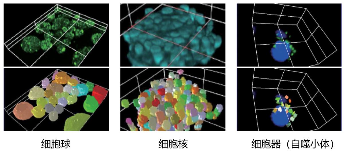 奥林巴斯全新NoviSight分析软件来袭 加速细胞分析进入3D时代