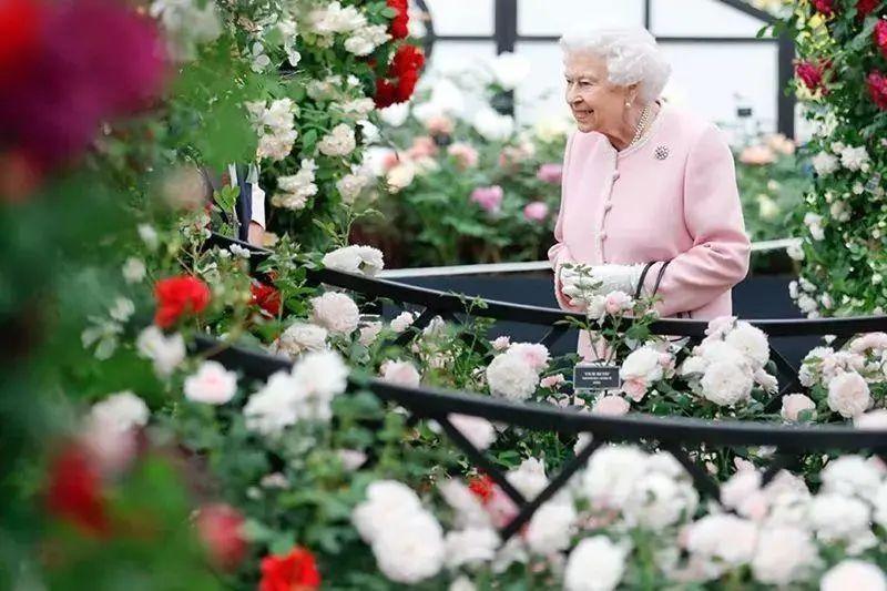 100卢比等于多少人民币俄罗斯宫崎骏最爱的花、英国女王亲自颁奖,绣球究竟有什么魔力?