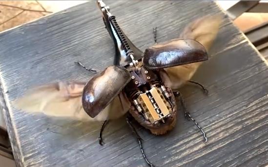 小伙用昆虫标本造出微型八缸发动机蒸汽甲虫 网友:仿佛活物