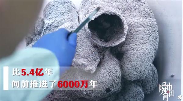 贵州发现6亿岁海绵宝宝 目前全球唯一孤品海绵标本:网友为研究员点赞