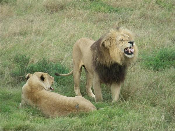 马戏团私自贩卖死狮 狮腿流入菜场:5人被判刑