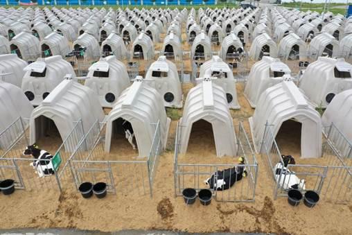科技装备新一代奶农