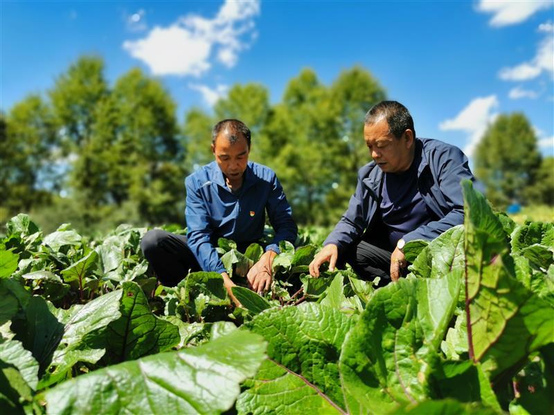 海省海东市互助土族自治县:新品种成了增收新产业