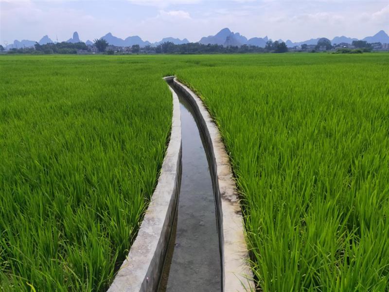 广西:秋粮丰收在即 高标建设显成效