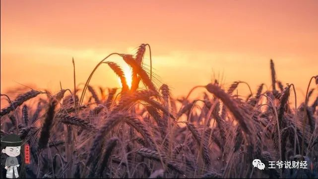 对比!2021年,俄罗斯粮食总产量或1.18亿吨!中国呢?