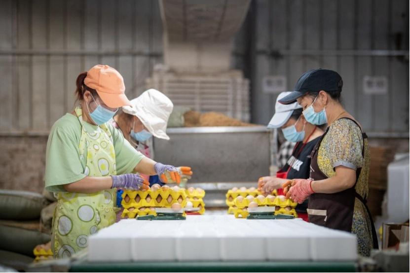 """南阳""""中国合伙人"""":三个男人卖鸡蛋,3年卖出9亿枚"""