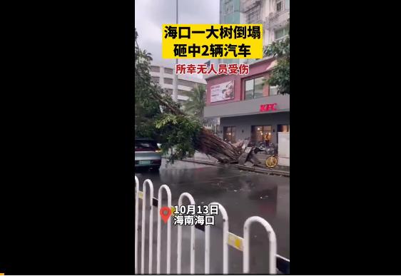 感受下 海南的风到底有多大?大树连根拔起 应对台风六大牢记